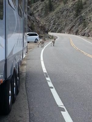 Avoiding mountain wildlife