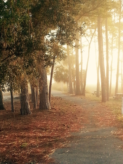 campground walking path